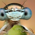Macrocosmos de la miniatura: sorprendentes fotografías de insectos magnificados