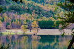 the fall season in chile is one of the most Beautiful things i have ever seen this photo was Taken close to pucon at lake villarrica chile Chile, Fall Season, South America, Vineyard, Most Beautiful, River, Mountains, Nature, Photography