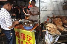 Dogs destined for the table: Horrific images show animals being killed, cooked and served up as a meal in Chinese tradition - Waiting his turn. - China is yet to make animal cruelty illegal and end the grim tradition despite campaigning by animal rights activists. Read more: http://www.dailymail.co.uk/news/article-2164353/Horrific-images-dogs-killed-cooked-served-meal-sick-Chinese-tradition.html#ixzz44iTo2cJ7 (Daily Mai)l