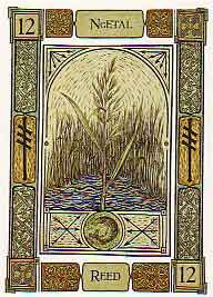 """Celtic Oracle Card,""""Reed"""" Ogham: nGetal. Keywords:Direction and Action; Your practicality will guide your steps; an action undertaken will bear fruit if you are careful to not allow yourself to be drawn in another direction. There may likely be unforeseen changes on horizon so remain vigilant. Even if the changes are not considered obstacles they still require adjustment"""