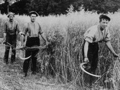 Cutting the Cailleach, the last sheaf of the harvest