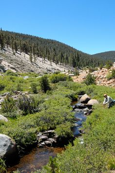 Fly fishing a beautiful Sierra alpine stream for golden trout