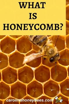 What is honeycomb?  This treasure from the hive is unique and made only by honeybees. #carolinahoneybees #beeswax #honeycomb
