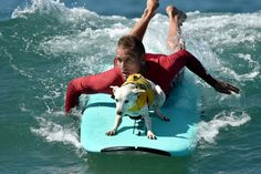 【写真特集】犬のサーフィン大会 米カリフォルニアで開催