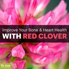Red clover - Dr. Axe http://www.draxe.com #health #holistic #natural