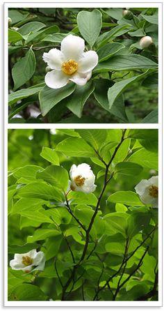 「シンボルツリーのある家」その二 8種類の樹木の紹介(前編)-イエマガ