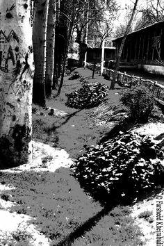 روزنه ديد Vision Slit  ©فرشيد خيرآبادی ©Farsheed Kheirabadi  https://www.facebook.com/Farsheedvard http://pinterest.com/farsheedvard  #عکس #Photography #فرشيدورد