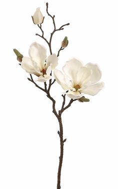 Cream Silk Magnolia Flower Spray Artificial Flower Magnolia Branch in Cream White to perfect any floral arrangement. Two beautiful cream white silk magnolia flowers and buds on a natural looking brown stem can complete your look. Fake Flowers, Artificial Flowers, Silk Flowers, White Flowers, Beautiful Flowers, Cream Flowers, Bouquet Flowers, Diy Bouquet, Flowers Vase