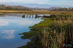 Tamar Valley Wetlands in Tasmania Australia