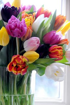 An array of Spring tulips.