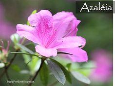 ABC das Mais Belas Flores