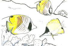 Marine Biologist Turned Coloring Book Illustrator