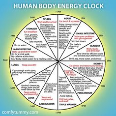 Chinese Body Clock Shows When Each Organ Is At Its Peak Energy | CORE SPIRIT
