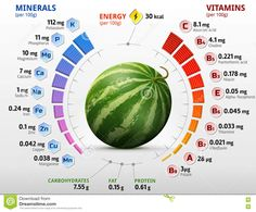 Vitamins And Minerals Of Watermelon Fruit Stock Vector - Illustration of circle, green: 76043736 Fruit Nutrition, Nutrition Chart, Fitness Nutrition, Health And Nutrition, Health And Wellness, Carrots Nutrition, Nutrition Store, Nutrition Quotes, Child Nutrition