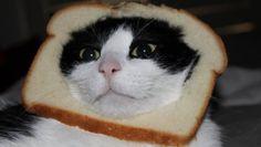 breadedcat