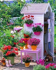 Potting closet with geraniums
