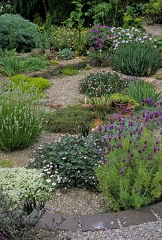 Dry Garden - Gravel: Dianthus, Garden, Thyme, Landscaping, Thymus, Lavender, Lavandula, Herbs, Lavandula Stoechas, Flowers, Euphorbia