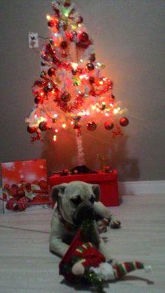 Feliz Natal da Athena!