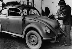 Image result for beetle coe