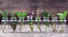 10 Kräuter, Die Man Im Wasser Aufziehen Kann Und Die Ein Ganzes Jahr Lang Im Haus Blühen