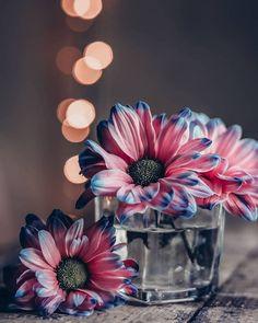 "2,789 aprecieri, 10 comentarii - mod va fashion (@girlymods) pe Instagram: "" ➖➖➖🦋➖➖➖  photo by : @vita_strazdaite_ 👈📸  Follow @loveoops_art 💎  عشق ترین رفیقاتونو تگ…"" Bokeh Effect, Out Of Focus, Just Amazing, My Flower, Wallpaper Backgrounds, Natural Beauty, Bloom, Drawings, Creative"