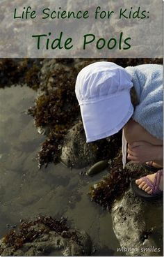 Exploring tide pools is a wonderful life science lesson for all ages! Take photos and research your finds when you get home! This post also includes a list of tide pool themed books that we recommend.