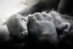 a mothers love knows no bounds :)