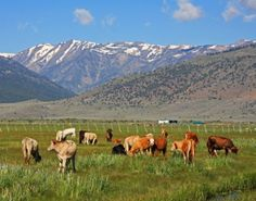 A cattle ranch outside of Bridgeport was the inspiration for Eli's Broken Arrow in book 2, Dead Giveaway.