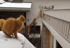 27 Gifs Of Animals Who Aren't Great At Jumping - Gallery