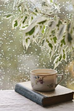 An alluring book, a cup of hot and aromatic tea, and refreshing raindrops. Perfect moment to #read.