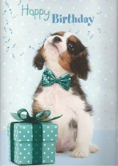New birthday quotes cute ideas Happy Birthday Puppy, Happy Birthday Wishes Quotes, Happy Birthday Pictures, Happy Birthday Greetings, Dog Birthday Wishes, Cavalier King Charles, Happy Birthday Wallpaper, Happy 1st Birthdays, Animal Birthday