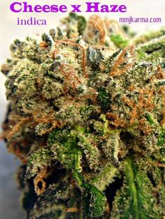 Cheese x Haze This super strong indica starts with an intense head high that moves to your body, making your eyes very heavy. Be sure you have some time to veg out when smoking this gem. Great for relaxation that will probably lead to a bit of snoozing...Zzzz mmjkarma.com  #indica #THC #sleep #insomnia #relief #mmj #karma