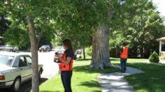 Citizen science has been gaining popularity in ecological research and resource management in general and in urban forestry specifically. As municipalities and nonprofits engage volunteers in tree data collection, it is critical to understand data quality