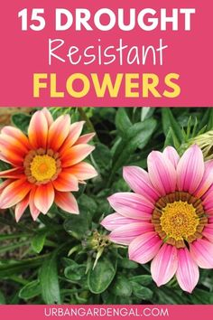 Drought tolerant flowers are ideal for hot, dry and drought prone areas. Here are 15 beautiful flowers that only need minimal water. #flowers #flowergarden Planting Vegetables, Planting Succulents, Planting Flowers, Flower Gardening, Garden Beds, Garden Plants, Indoor Plants, Flowering Plants, Annual Flowers