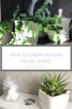 beginners guide to growing healthy House plants — Tidying with Tania Popular House Plants, Meditation Rooms, Yoga Meditation, Cheese Plant, Lower Lights, Best Indoor Plants, Spider Plants, Salon Design, Green Plants
