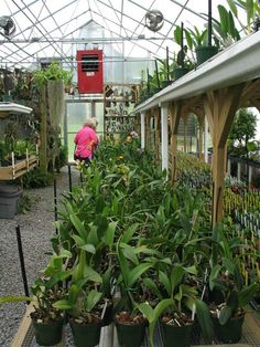 Greenhouse orchid gardening pinterest home for Better homes and gardens greenhouse
