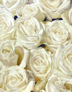 White Roses 121 x 152 cm