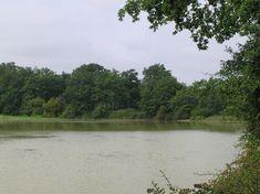 L'étang du Moura est le plus long étang du Bas-Armagnac et constitue une zone remarquable et originale au sein du site Natura 2000 des étangs du Bas-Armagnac. ©Collection Tourisme Gers/CPIE Armagnac, Destinations, Lacs, River, Nature, Outdoor, Collection, Breast, Tourism