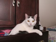 Top Drawer kitty