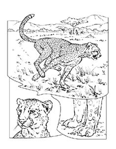 Cheetah Coloring Page  Colors Coloring pages and Coloring