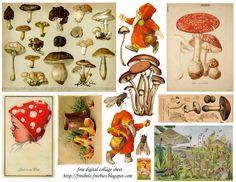 Freebie+Mushrooms+collage+sheetkopie.png (1600×1236)