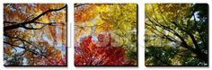Colorful Trees in Fall, Autumn, Low Angle View Landscapes Canvas Art Set - 152 x 51 cm