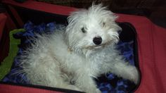 URGENT & IMMEDIATE Need For Toby | Pet Expenses - YouCaring.com