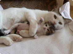 chatte couchee avec son chaton nouveau ne