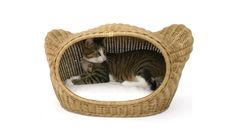 Cat In Cat Basket