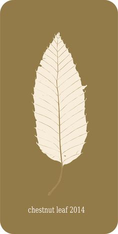 chestnut leaf 2014 by @yamachem, a Japanese chestnut 's fallen leaf in Japan in fall 2014//////////////////////////////////////////////////////////////////////////So far,the fallen leaf which I think is most beautiful in Japan., on @openclipart