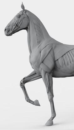 Horse_keyshot_04.jpg