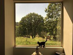 Little cat bit window