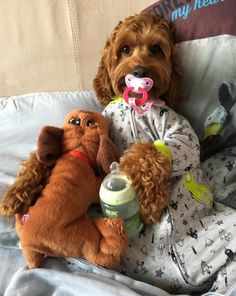 Fantastic pretty dogs info are offered on our internet site. Super Cute Puppies, Cute Baby Dogs, Cute Little Puppies, Cute Funny Dogs, Cute Little Animals, Cute Funny Animals, Hilarious Sayings, Funny Signs, 9gag Funny