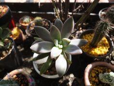 catus y suculentas Catus, Cactus Y Suculentas, Plantar, Exterior, Instagram, Bikinis, Gardens, Propagating Succulents, Cactus Care